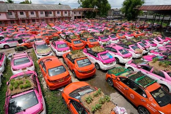 Idled Thai taxis go green with mini-gardens on car roofs, is both an act of protest and a way to feed the staff during this tough time.