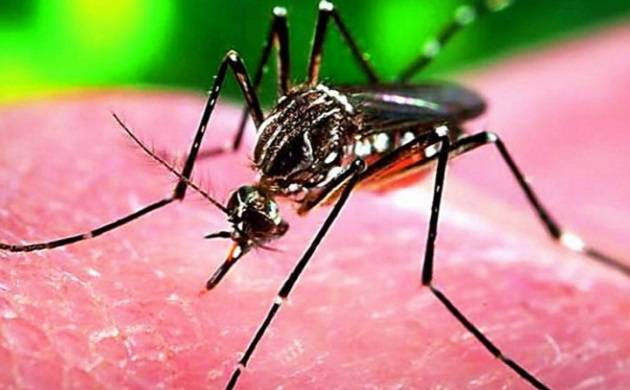Brazil declares end to national Zika emergency