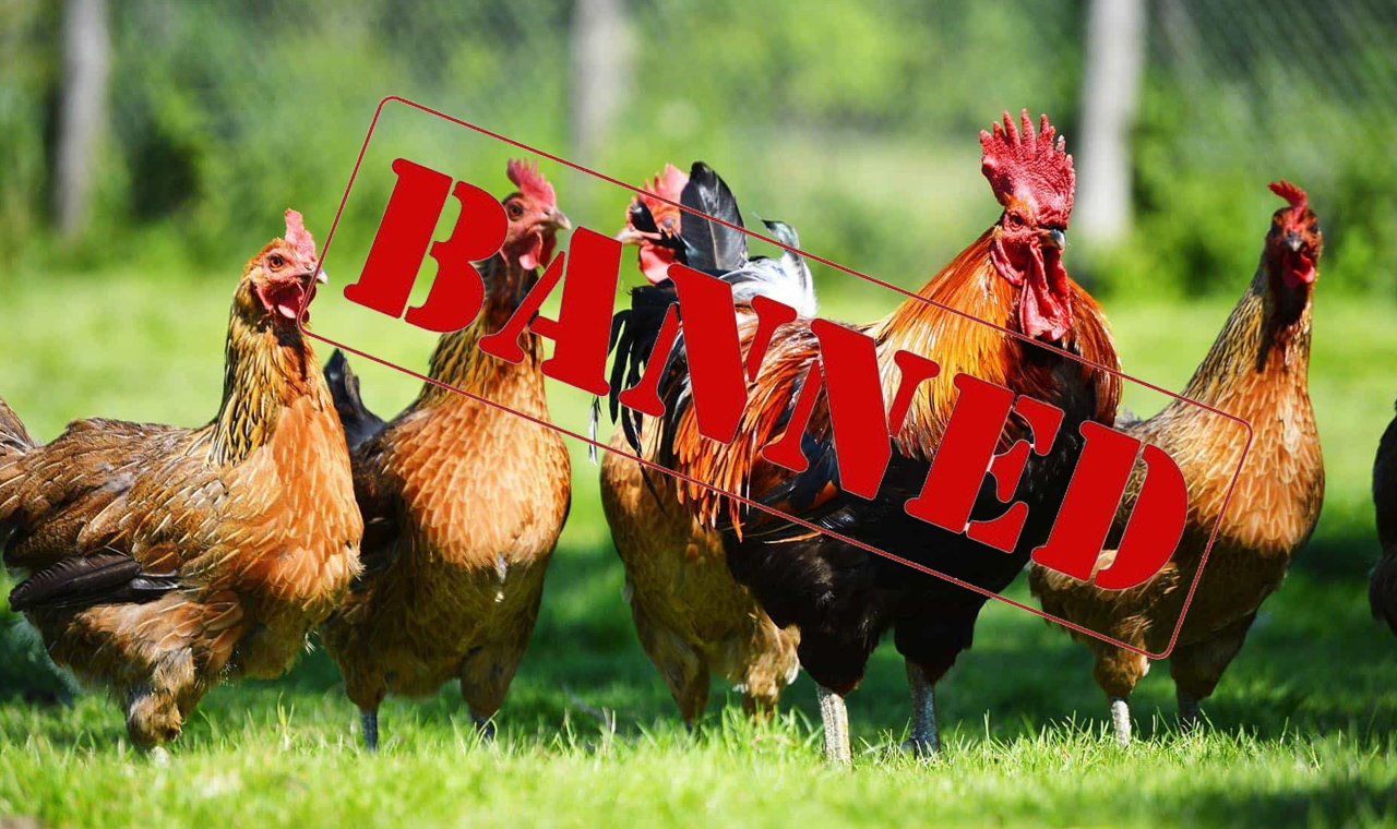 UAE bans import of birds and poultry products from Bulgaria