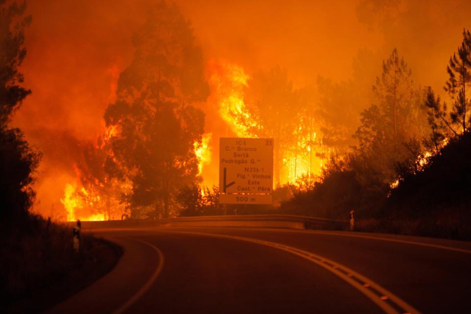 Portugal: Forest fire kills 43, injures 59 near Coimbra