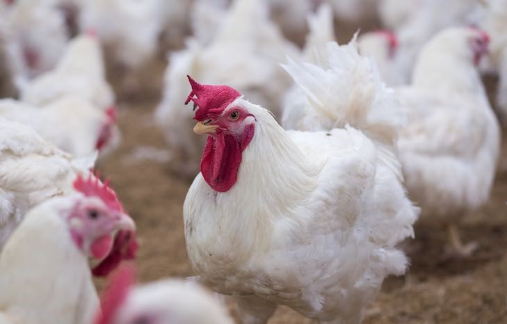 assamgovtimposestemporarybanonentryofpoultryproducts
