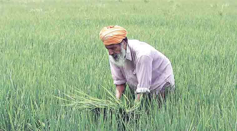 Punjab procures 152,61,635 tonnes of paddy