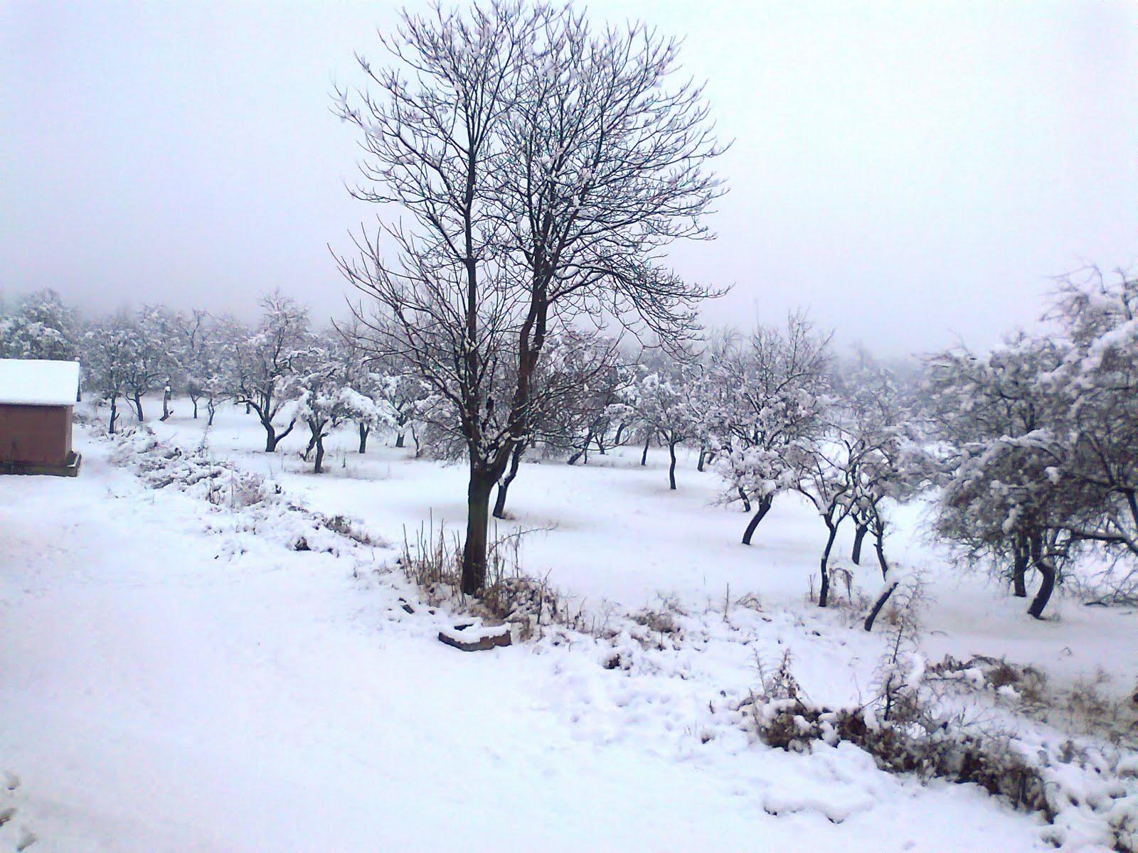 snowfallinkashmirbringsdownmercury