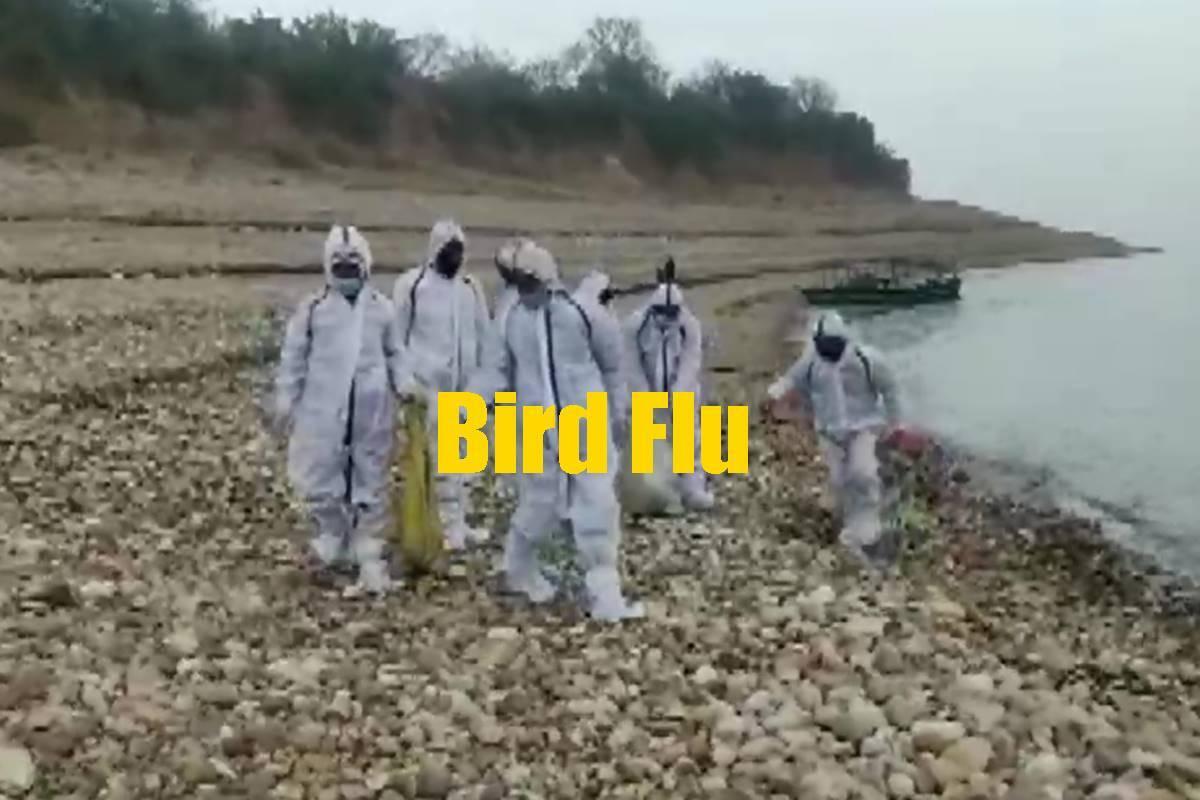 madhyapradeshconfirmsbirdfluvirusinninedistricts
