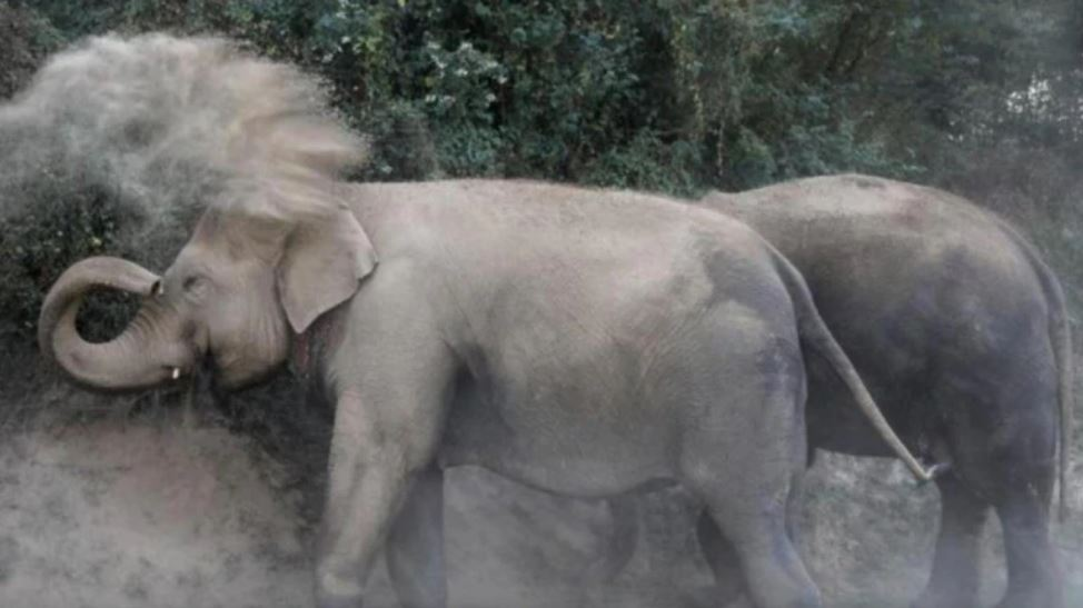 Odisha: 3 killed, 4 injured after elephant goes wild in Puri district