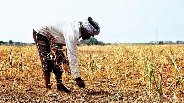 TN govt issues order to enable district central cooperative banks to disburse loans to farmers