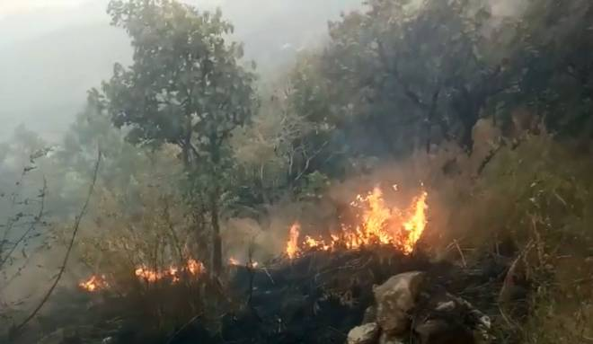 Five killed in major forest fire in Theni district,Tamil Nadu