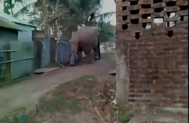 Elephant strays into WB town, damages many houses