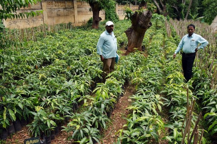 Up govt to plant 22 crore saplings on August Kranti Diwas