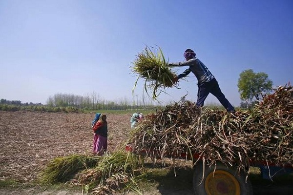 We did not ask for this freedom: Voices of farmers from beyond Punjab, Haryana