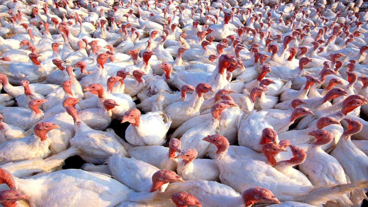 Around 12 states confirm infection of Bird Flu