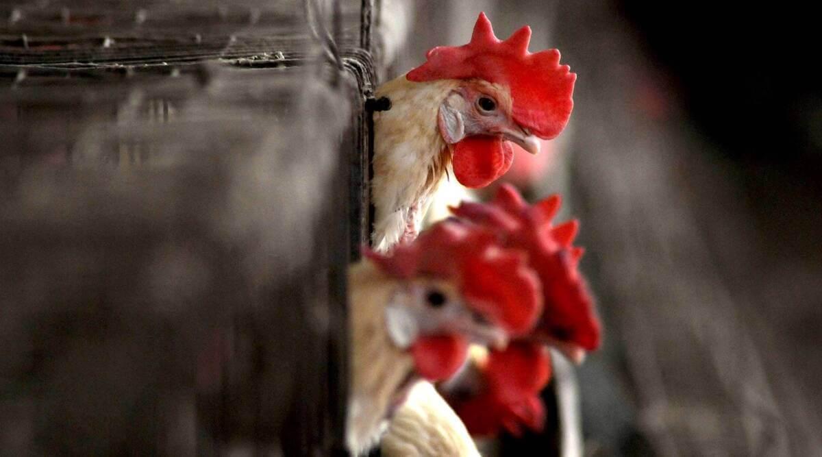 birdflu:poultrymarketsindelhitoreopenaftersamplestestnegativeforh5n1
