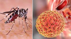 Five more test positive for Zika in Kerala