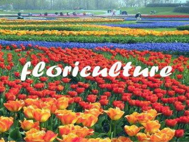 J&K govt proposes to set up centres of excellence for floriculture