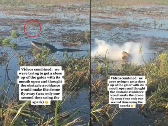 Alligator eats drone in viral video - WATCH