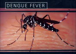 Dengue, malaria cases on the rise in Hyderabad