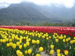 flowerbedeckedkashmirlookstoatouristboom