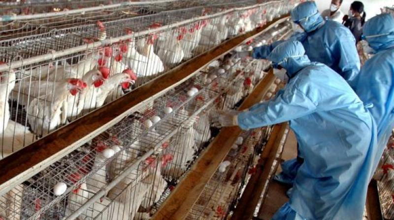 All precautionary measures being taken after suspected bird flu cases in Delhi