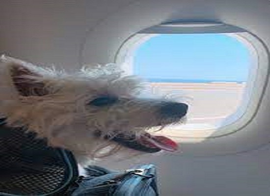 Pet to travel in luxury, Dog owner books entire Air India business class cabin